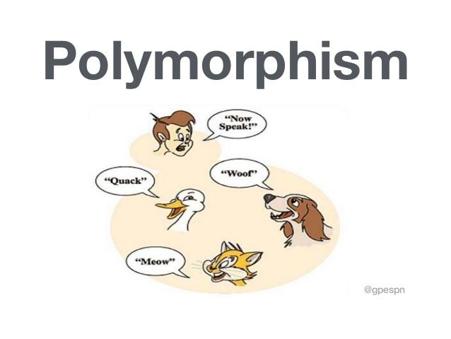 OOP (Object Oriented Programming) - Polymorphism 1
