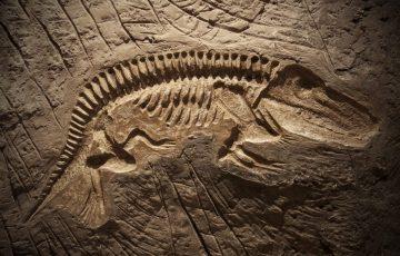 Bagaimana Proses Pembentukan Fosil Organisme Purba? 4