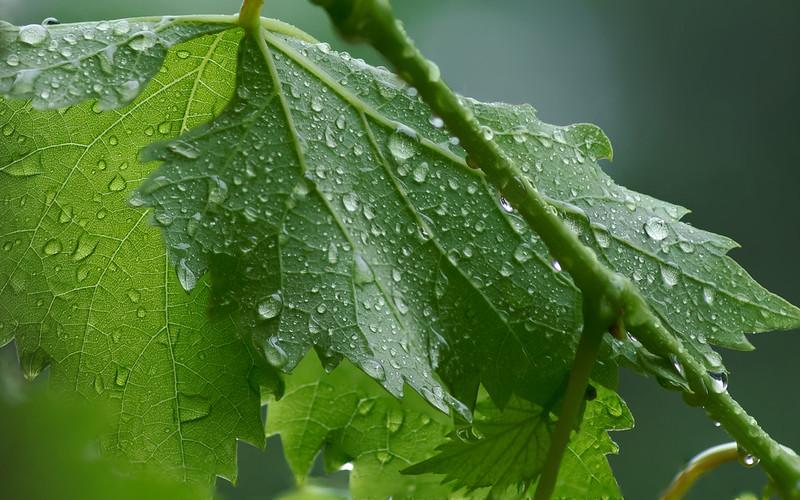 Petrichor : Aroma Tanah Basah Setelah Turun Hujan 5