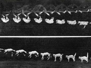 Mengapa Kucing Selalu Mendarat Dengan Kakinya? 11