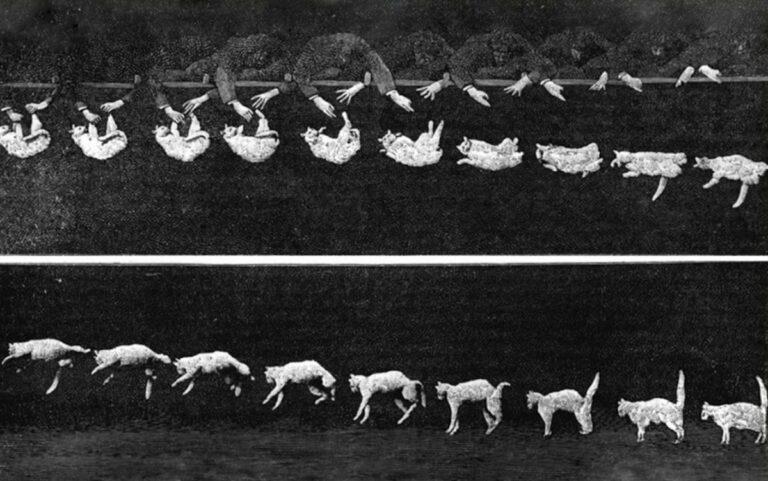 Mengapa Kucing Selalu Mendarat Dengan Kakinya? 1