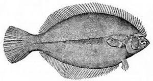 Ikan Sebelah