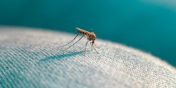 6 Fakta tentang Nyamuk, 'Si Vampire' yang Sesungguhnya 22