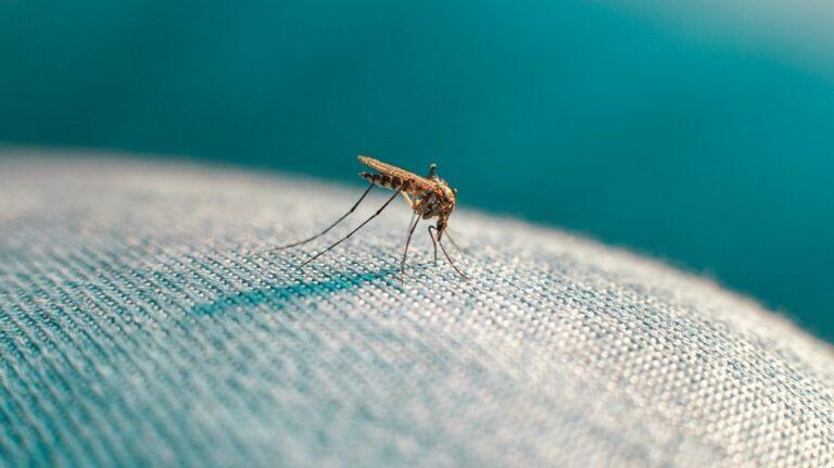 6 Fakta tentang Nyamuk, 'Si Vampire' yang Sesungguhnya 1