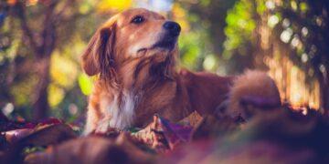 Rekomendasi Novel bertema hewan yang wajib kalian baca sebagai pecinta hewan 28