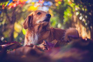 Rekomendasi Novel bertema hewan yang wajib kalian baca sebagai pecinta hewan 10