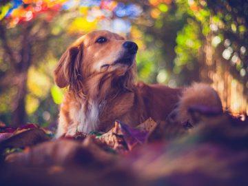 Rekomendasi Novel bertema hewan yang wajib kalian baca sebagai pecinta hewan 7