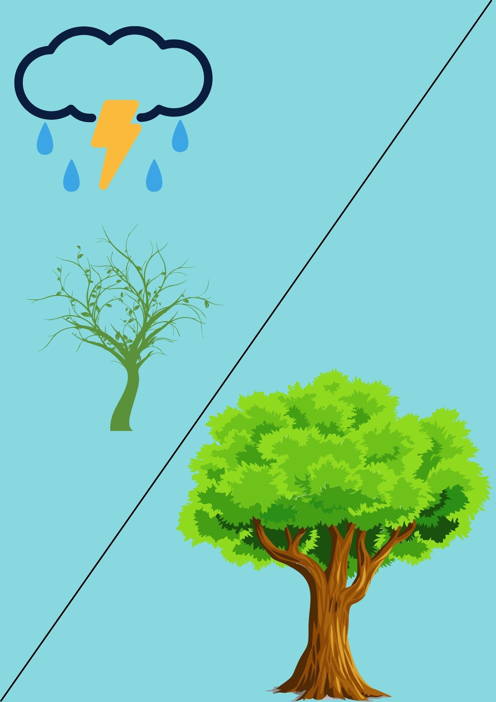 Ilustrasi pepatah风暴使树木深深扎根 dibacafēng bào shǐ shù mù shēn shēn zhā gēn yang mengajarkan manusia harus jadi pribadi yang kuat meskipun kena badai akan menjadi seperti pohon (sebelah kanan) kuat dan tinggi. Sumber: Dokumentasi Penulis