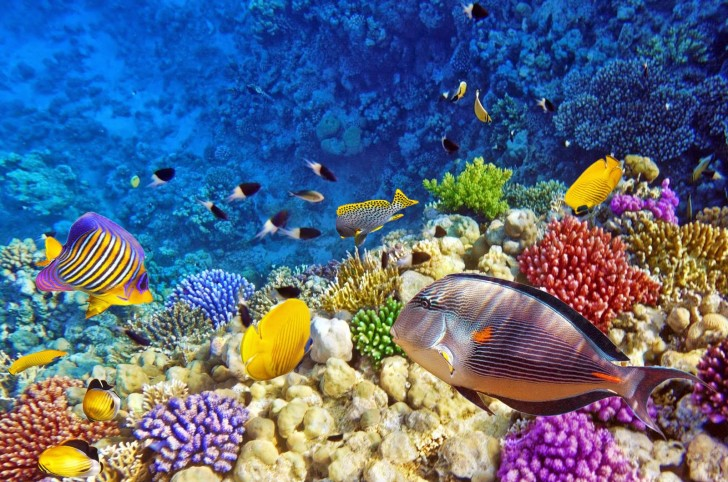 Keindahan bawah laut Raja Ampat
