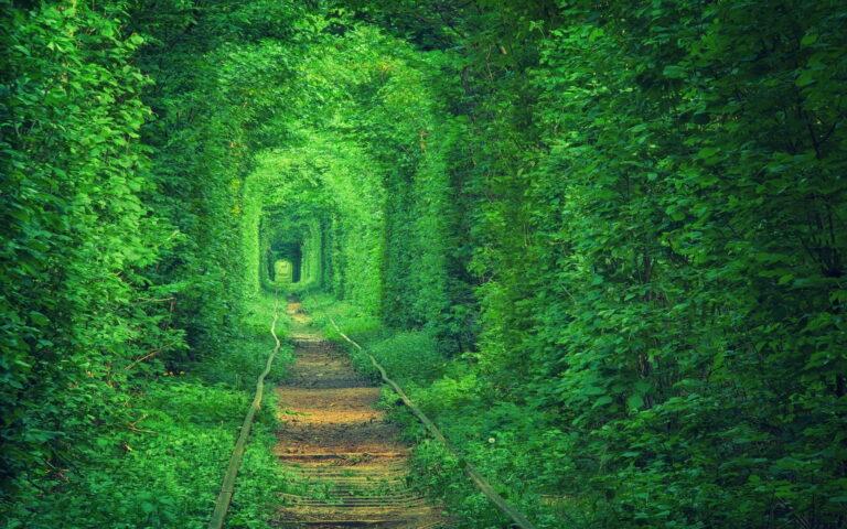 Misteri Terowongan Kereta Api Wilhemnia, Terpanjang di Indonesia 1