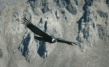 4 Jenis Burung Raksasa Yang Ada di Dunia 18