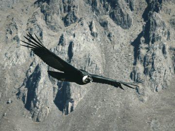 4 Jenis Burung Raksasa Yang Ada di Dunia 3