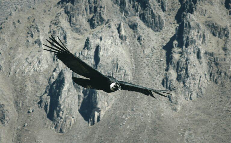 4 Jenis Burung Raksasa Yang Ada di Dunia 1