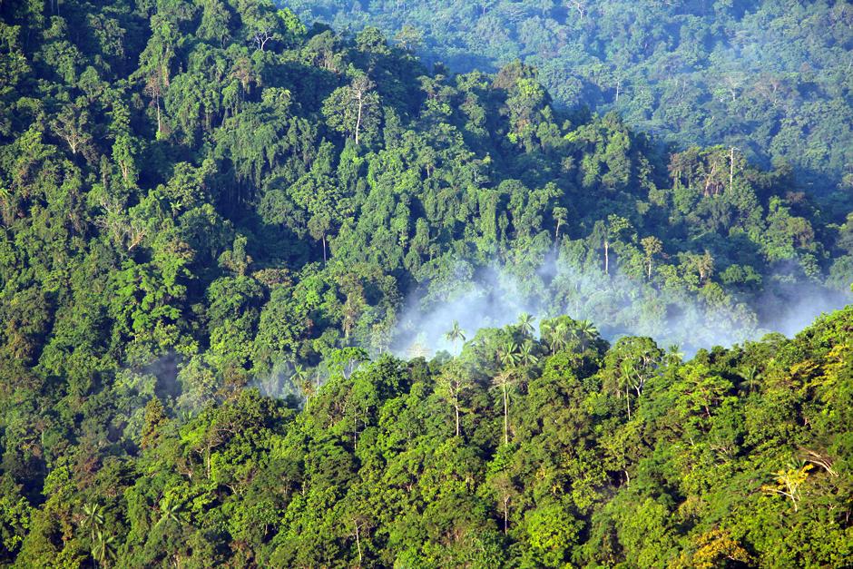 Hutan hujan tropis papua new guinea