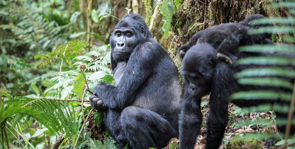 Hati-Hati, 5 Hewan Ini Herbivora Tapi Bisa Jadi Berbahaya 7