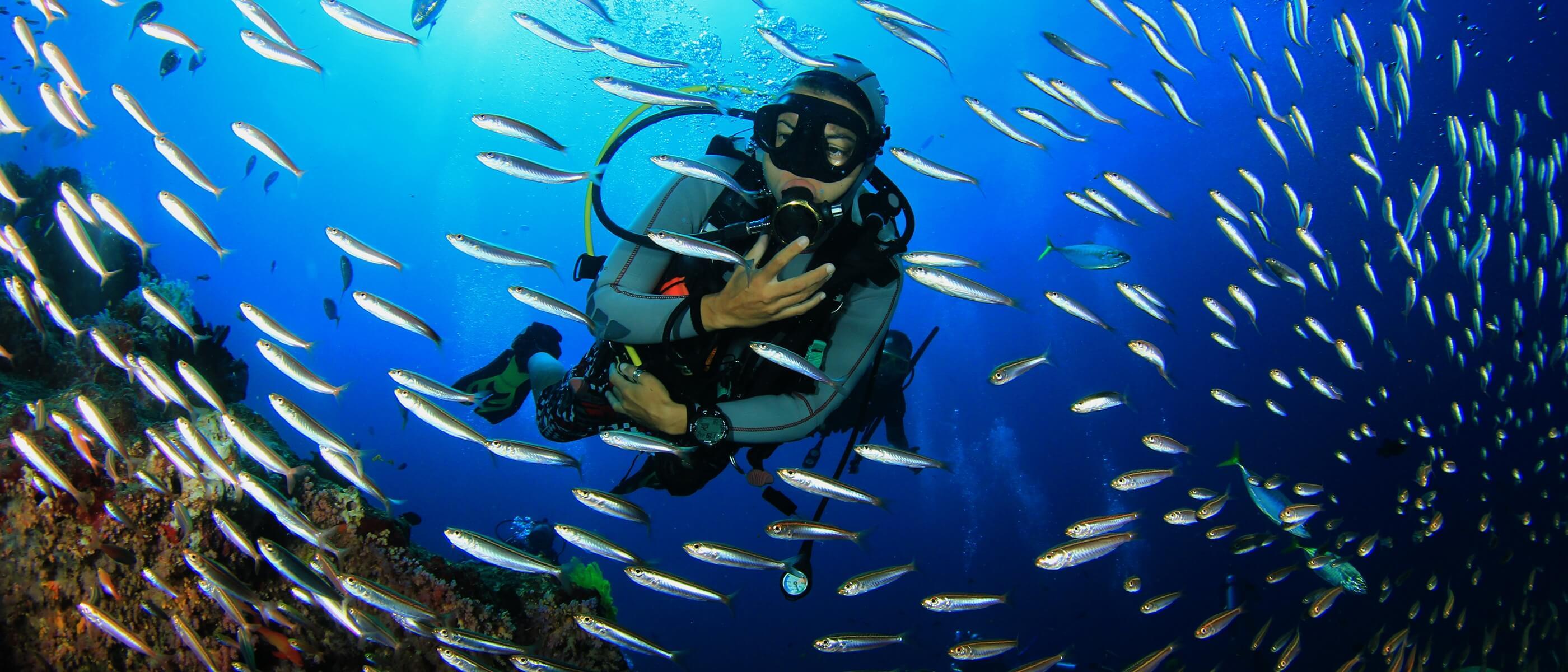 Wilayah Cairn di Australia merupakan area Great Barrier Reef yang menyimpan banyak satwa laut didalamnya.