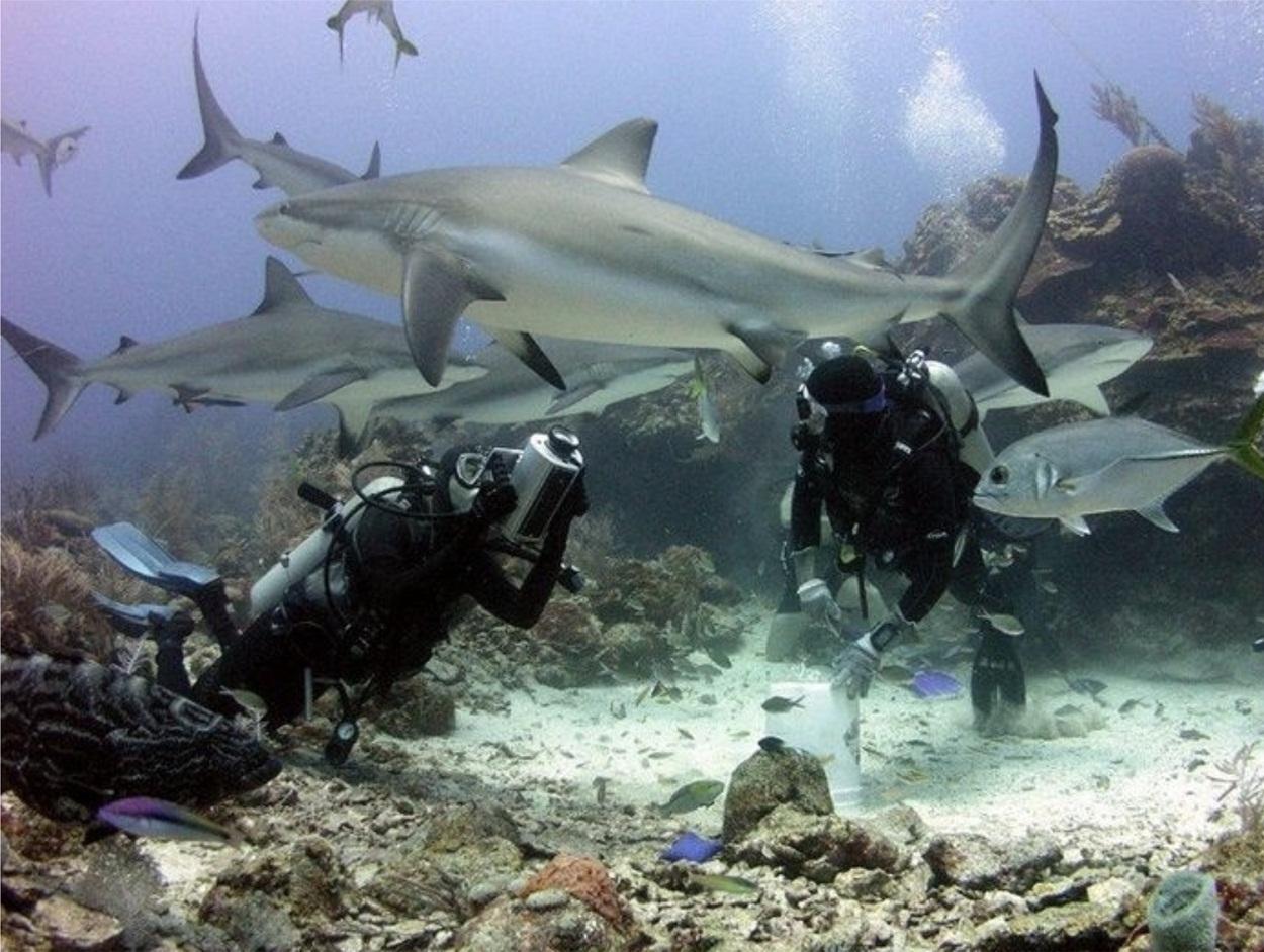 Menyelam bersama hiu di Roatan, Honduras. (Dok. www.roatan.online)