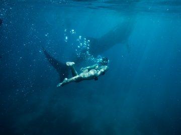 Lokasi-Lokasi Melihat Binatang Aneh di Laut Indonesia 16