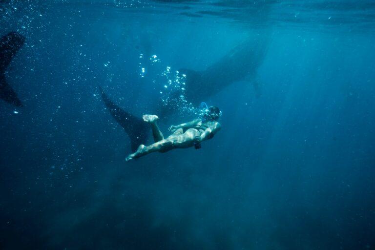 Lokasi-Lokasi Melihat Binatang Aneh di Laut Indonesia 1