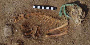 Kuburan Tertua Satwa Ada di Mesir 10