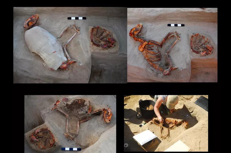 Fosil seekor anjing yang dikuburkan didalam sebuah bejana tanah liat. Fosil ini diperkirakan telah berumur 2.000 tahun. (dok. livescience)