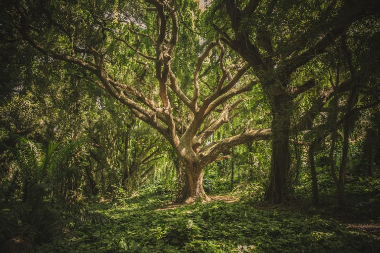 Saat Pohon Tersenyum Ikhlas 1