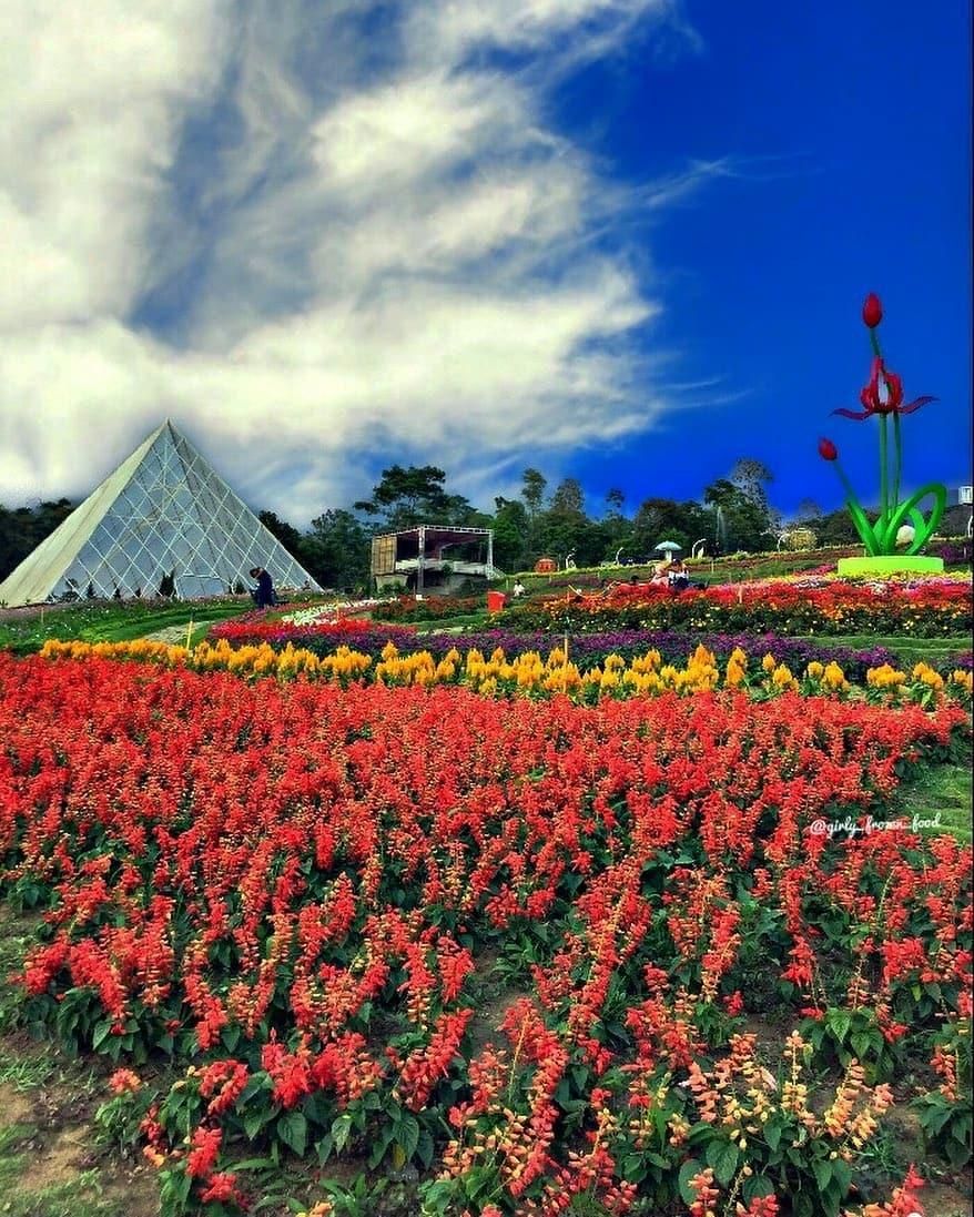 Senang melihat keindahan bunga? kunjungi salah satu dari tempat ini! 3