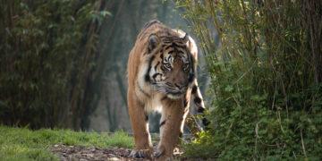 6 Jenis Hewan Langka Di Indonesia yang Perlu Dilestarikan 23