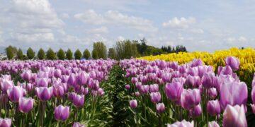 Senang melihat keindahan bunga? kunjungi salah satu dari tempat ini! 15
