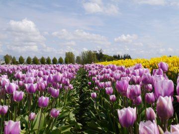 Senang melihat keindahan bunga? kunjungi salah satu dari tempat ini! 11