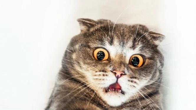 7 Tingkah Laku Kucing Beserta Mitos Dibaliknya 4