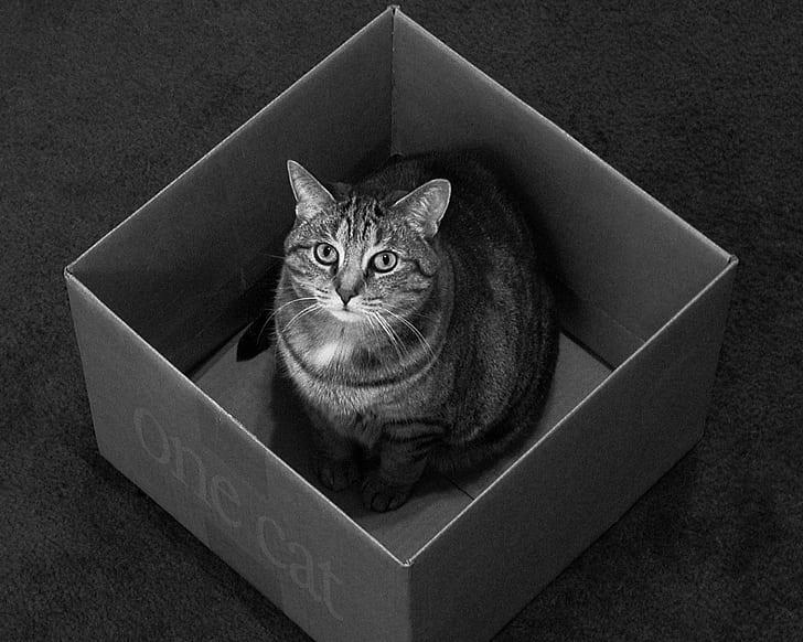 7 Tingkah Laku Kucing Beserta Mitos Dibaliknya 6