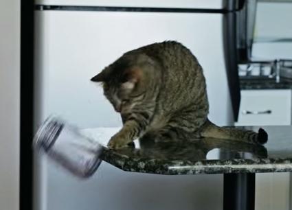 7 Tingkah Laku Kucing Beserta Mitos Dibaliknya 7