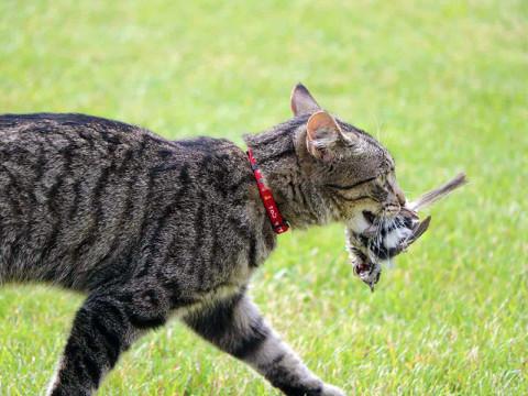 7 Tingkah Laku Kucing Beserta Mitos Dibaliknya 9