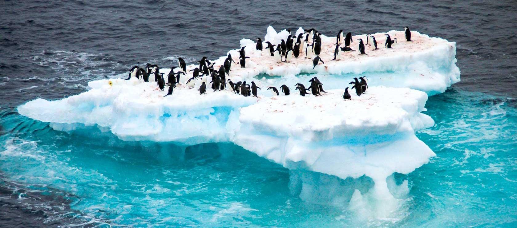 Melelehnya lapisan es selain menyebabkan perubahan arah kutub, juga menghilangkan tempat tinggal bagi satwa. (photo: dok. cgtn)