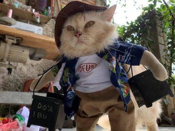 7 Tingkah Laku Kucing Beserta Mitos Dibaliknya 21
