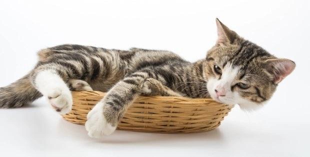 Waspadai 7 Gejala Gangguan Kesehatan Ini Pada Kucing Peliharaan Kamu 3