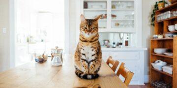 Waspadai 7 Gejala Gangguan Kesehatan Ini Pada Kucing Peliharaan Kamu 16