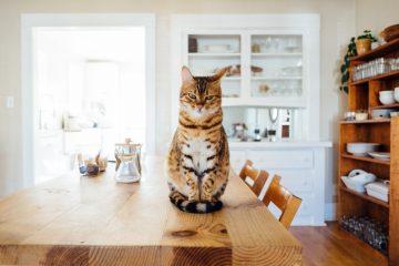 Waspadai 7 Gejala Gangguan Kesehatan Ini Pada Kucing Peliharaan Kamu 7