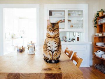 Waspadai 7 Gejala Gangguan Kesehatan Ini Pada Kucing Peliharaan Kamu 9