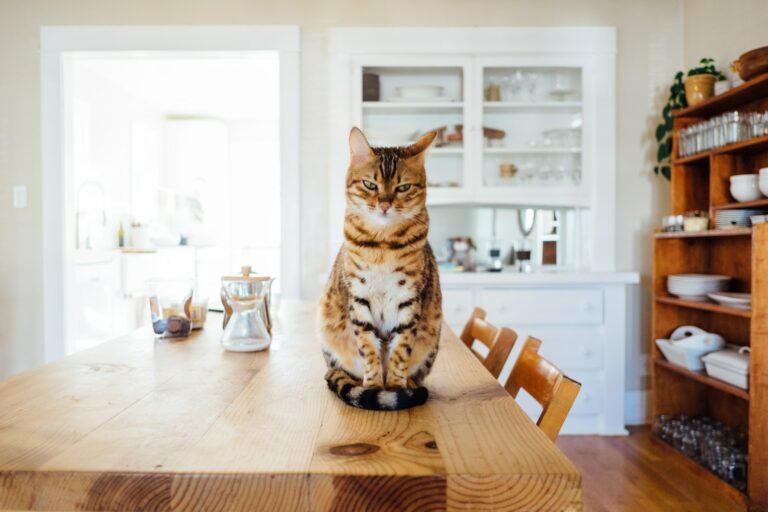 Waspadai 7 Gejala Gangguan Kesehatan Ini Pada Kucing Peliharaan Kamu 1