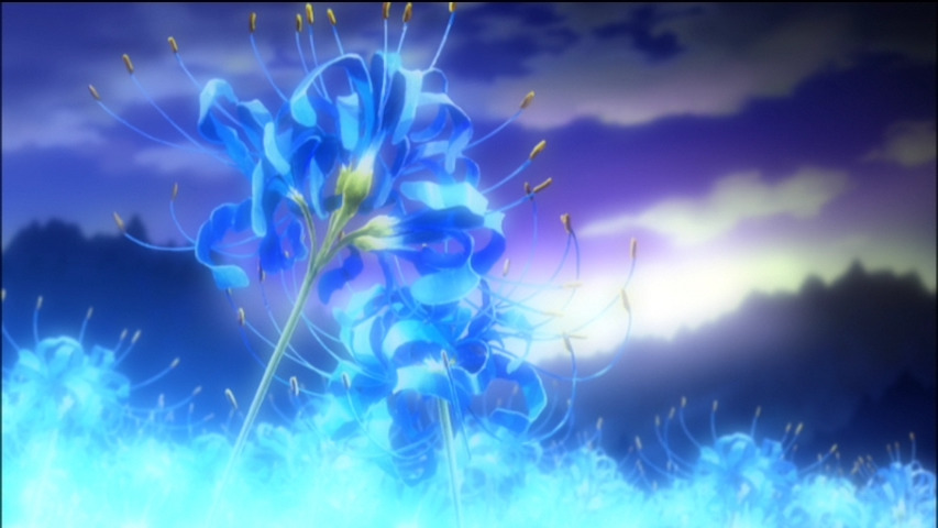 Blue Spider Lily