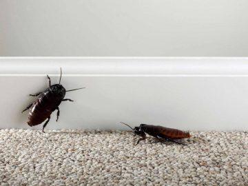 Persahabatan Dua Ekor Kecoa (Bagian 1) 10