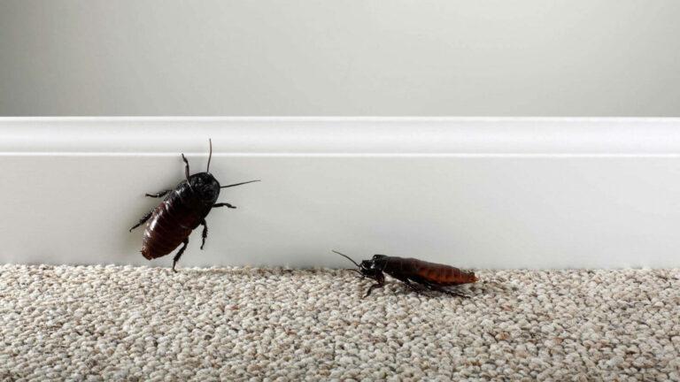Persahabatan Dua Ekor Kecoa (Bagian 1) 1