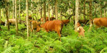 Agrosilvopastura: Antara Kelestarian Hutan Dan Kesejahteraan Masyarakat 7