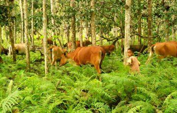 Agrosilvopastura: Antara Kelestarian Hutan Dan Kesejahteraan Masyarakat 6