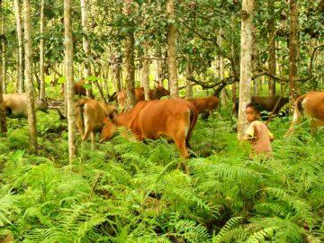 Agrosilvopastura: Antara Kelestarian Hutan Dan Kesejahteraan Masyarakat 4