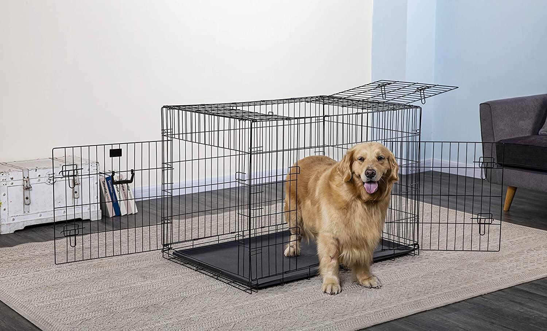 Anjing Golden : Karakter, Variasi Jenis, kelebihan & Harga (Update) 10
