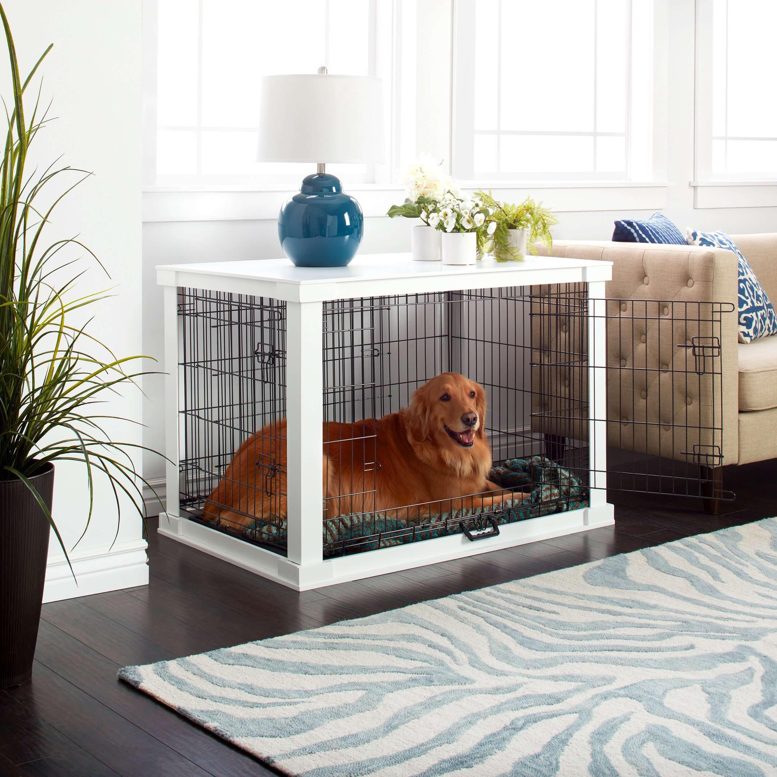 Anjing Golden : Karakter, Variasi Jenis, kelebihan & Harga (Update) 12