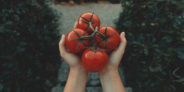 10 Khasiat Tomat, Kamu Wajib Tahu! 5